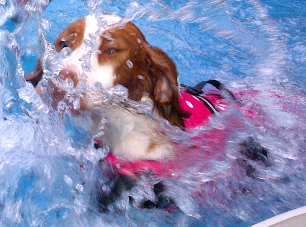 Dog splashing around in a swimming pool